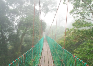 Loopbrug danum valley